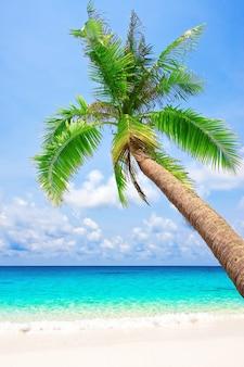 Tropischer weißer sandstrand mit palme. koh kood, thailand