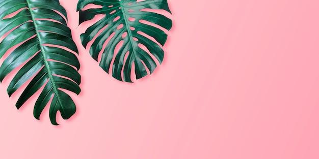 Tropisches blätter monstera und philodendron auf minimalem sommer des rosa farbhintergrundes