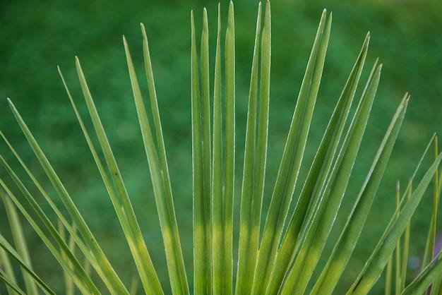 Tropisches blatt auf einem grünen hintergrund.