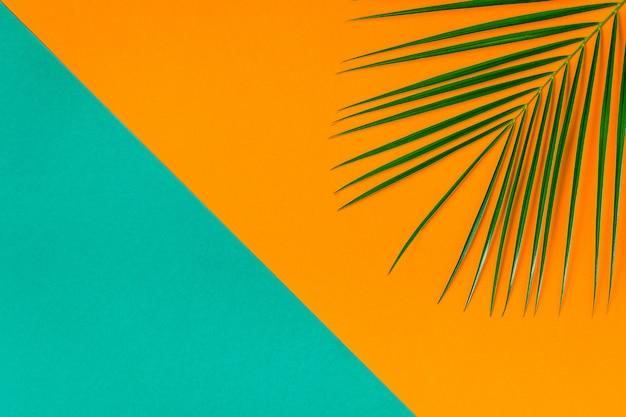 Tropisches blatt auf pastellhintergrund
