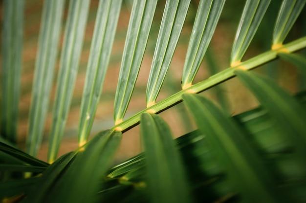 Tropisches blatt der makrophotographie mit unscharfem hintergrund