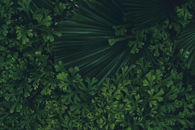 Tropisches blatt, dunkelgrünes laub im regenwald, abstrakter naturhintergrund