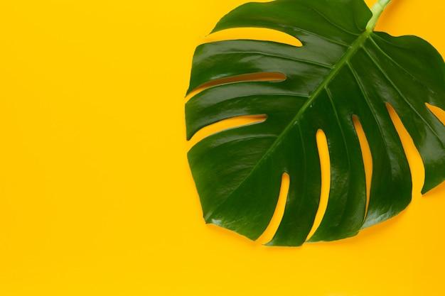 Tropisches dschungelblatt, monstera, ruhend auf flacher oberfläche, auf gelb.
