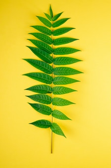 Tropisches dschungelgrün mit einem zweig hinterlässt adernmakro auf gelb
