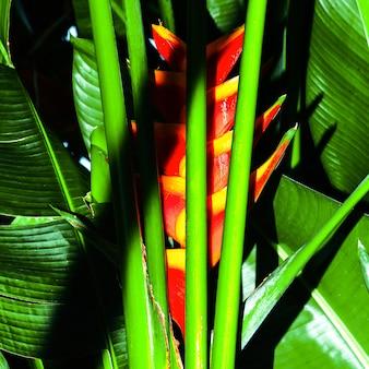 Tropisches grün. mode-design. für drucke