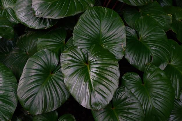 Tropisches grün verlässt im natürlichen licht und im schatten mit grüner getonter farbe und selektivem foc
