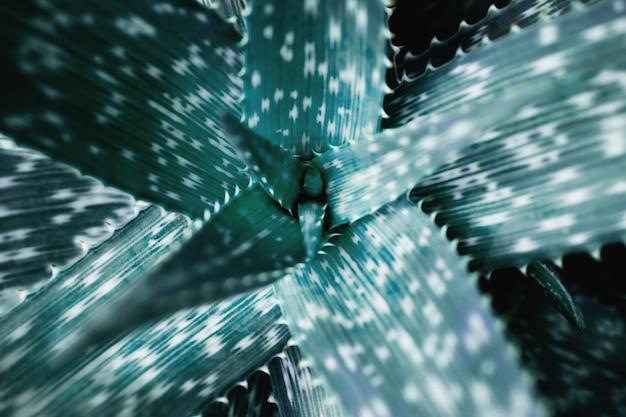 Tropisches grünes blatt. botanischer baum. draufsicht und selektiver fokus