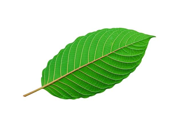 Tropisches grünes blatt lokalisiert auf weiß