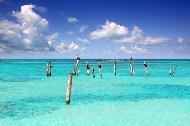 Tropisches meer des karibischen pelikan-türkisstrandes