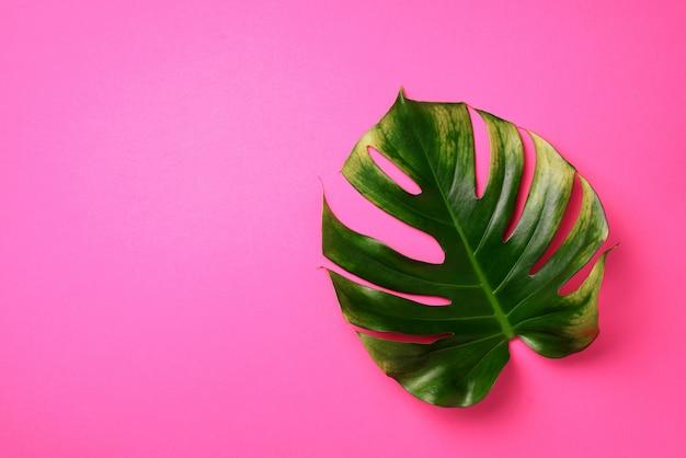 Tropisches monstera-blatt auf rosafarbenem hintergrund. sommerkonzept