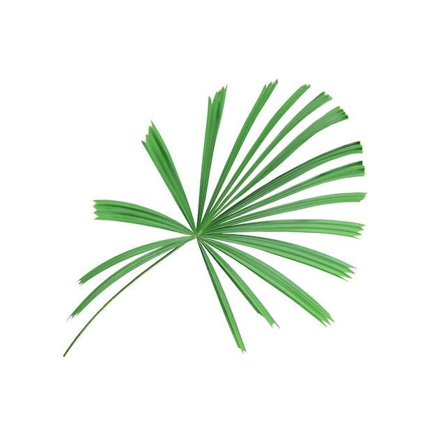 Tropisches naturgrünes palmblattmuster, chinesische windmühle