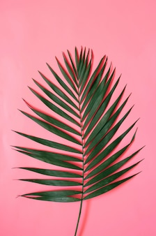 Tropisches palmblatt auf pastellrosa hintergrund
