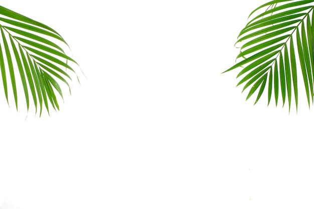 Tropisches palmblatt auf weißem hintergrund