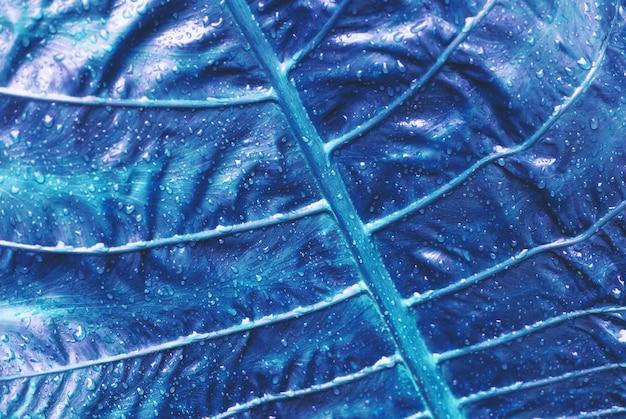 Tropisches palmblatt mit wassertropfen
