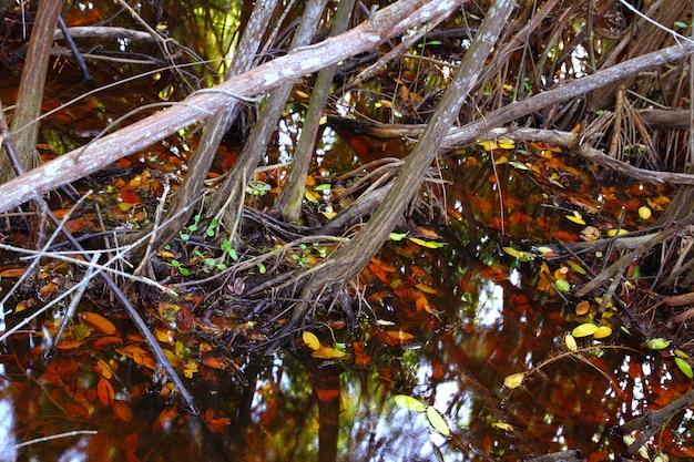 Tropisches wasserdetail des mangrovensumpfes