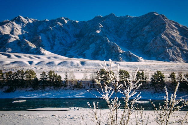 Türkisfarbener katun fluss im altai-gebirge an einem frostigen wintertag