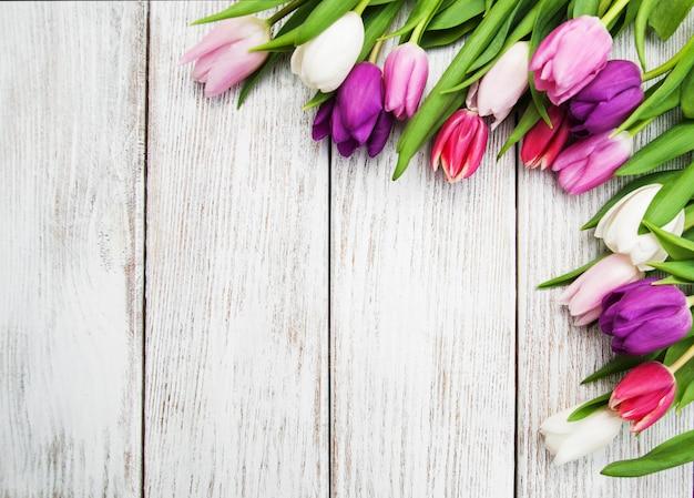Tulpe frühlingsblumen