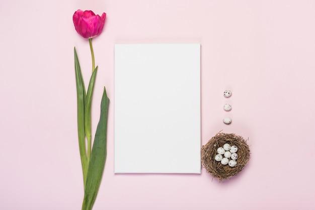 Tulpe mit wachteleiern im nest und im papier
