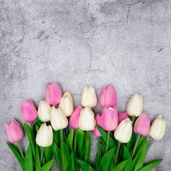 Tulpen auf einem grau