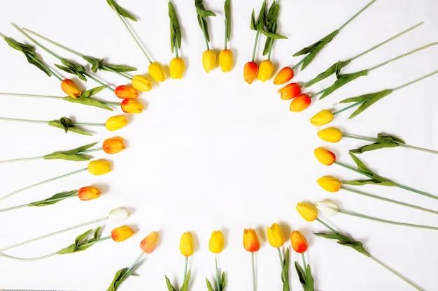 Tulpen auf einem weißen