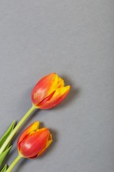Tulpen auf grauem papierhintergrund