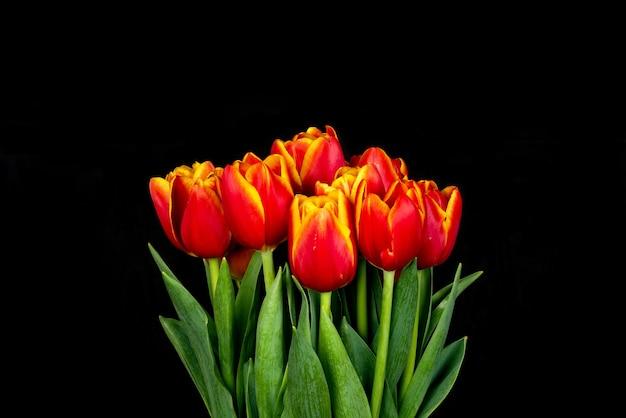 Tulpen auf schwarzem hintergrund