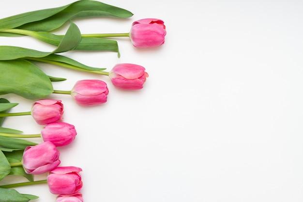 Tulpen auf weißem hintergrund. freier platz für text