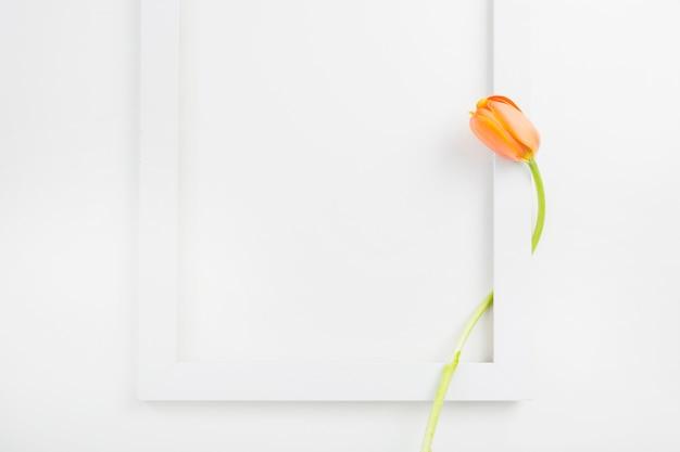 Tulpen im weißen grenzrahmen über hintergrund