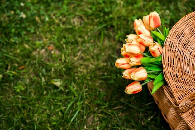 Tulpen in einer draufsicht des picknickkorbs