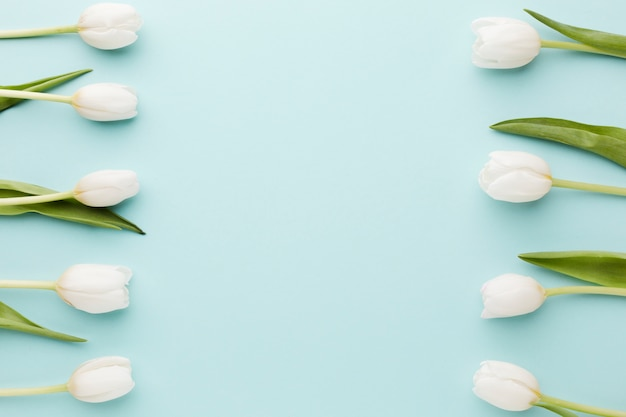 Tulpenblumen mit draufsicht der blattanordnung