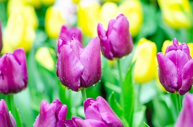 Tulpenblumen mit unscharfem musterhintergrund