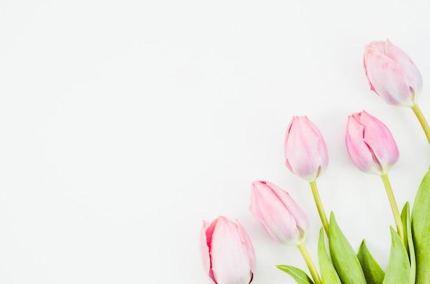 Tulpenblumen