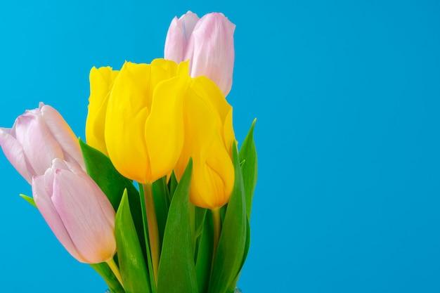 Tulpenmischung gegen blaue pastelloberfläche