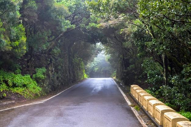 Tunnel aus bäumen und licht am ende.