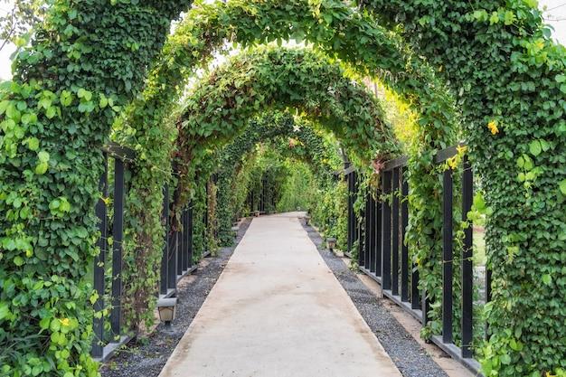 Tunnelpfadbaumgrün schattig