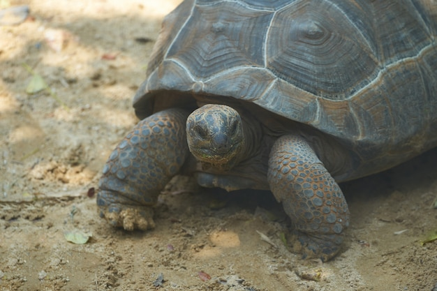Turtoise stehen auf sandboden in schattigem