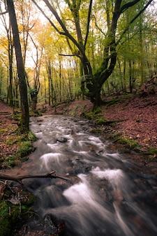 Typische ansicht der baskischen wälder im baskenland des artikutza-gebiets