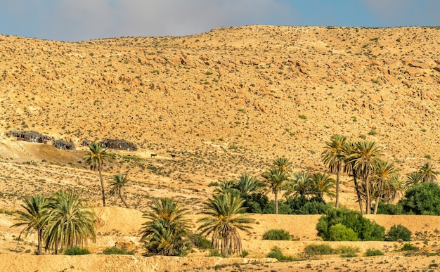 Typische tunesische landschaft bei ksar ouled soltane bei tataouine. nordafrika Premium Fotos