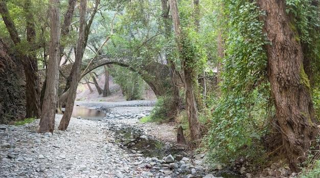 Tzelefos-brücke im paphos-wald, zypern