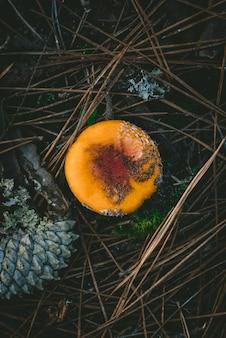 Über kopf vertikaler schuss eines pilzes, der am wald wächst