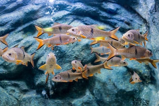 Über seefische und süßwasserfische im aquarium