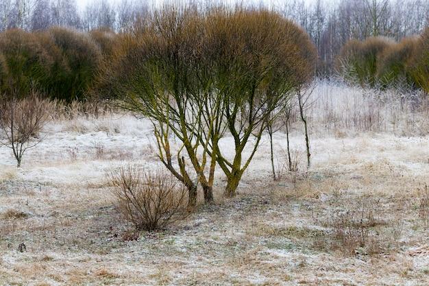 Überall im winter mit schneebedeckten laubbäumen bedeckt, liegt überall weißer schnee
