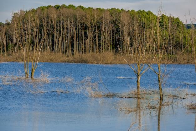 Überflutete tote bäume im wald. verlassener see