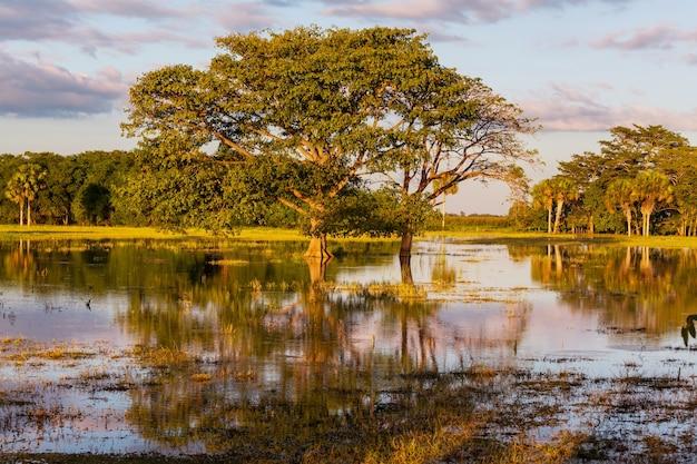 Überflutete tropische landschaften bei sonnenuntergang