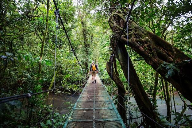 Übergabe der brücke im grünen dschungel, costa rica, mittelamerika
