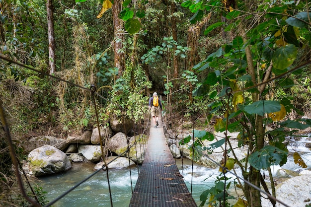 Übergabebrücke im grünen dschungel, costa rica, mittelamerika