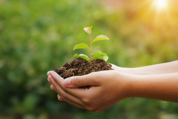 Übergeben sie das halten der jungpflanze und des grünen hintergrundes mit sonnenschein. öko-konzept tag der erde