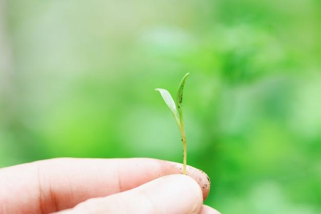 Übergeben sie das halten des jungpflanzewachstums des schösslings auf neutralem grün - landwirtschaftspflänzchen, welches das wachsen für das pflanzen auf boden im garten sät