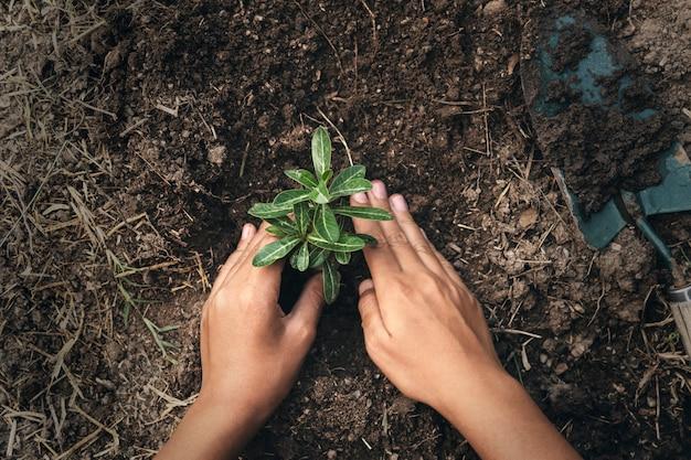 Übergeben sie das pflanzen des baums im boden mit sonnenuntergang am garten