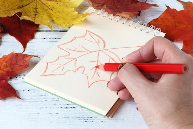 Übergeben sie zeichnung mit dem stift und sketchbook, die durch ahornblätter umgeben werden